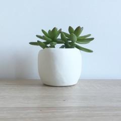 Succulentes lover! (DIY)